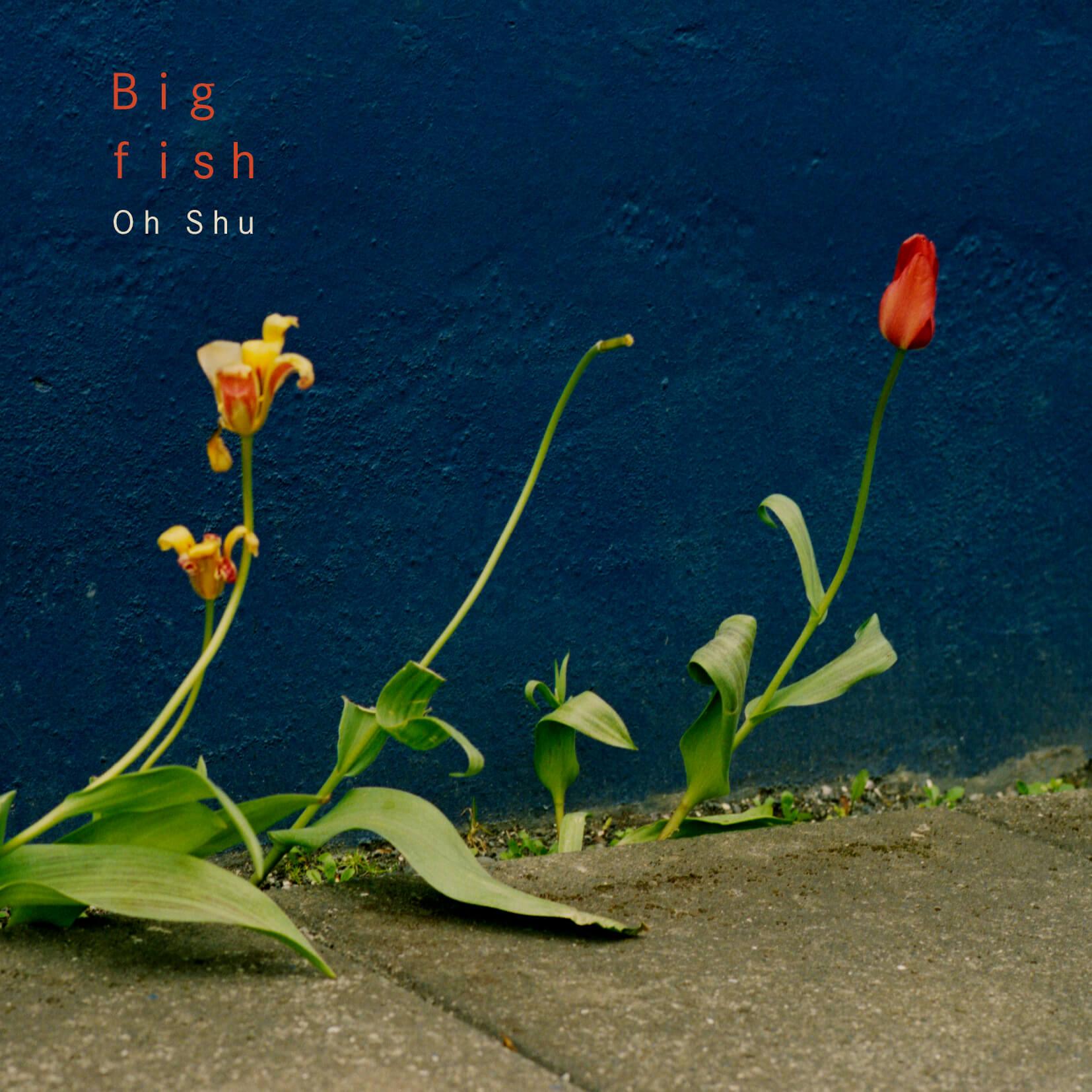 「王舟 big fish」の画像検索結果